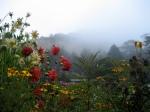 garden_of_flowers