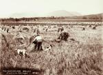 men_working_fields
