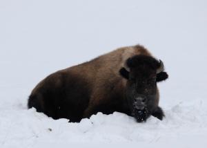 Nature sleeps in winter
